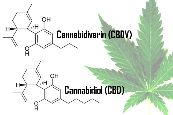 Both CBD and CBDV are produced naturally by cannabis. Unlike THC, these two compounds do not get patients high.