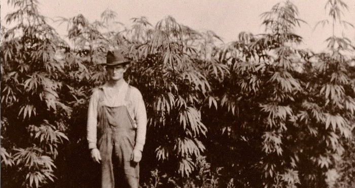 Hemp was a major industrial crop throughout history but was banned along with marijuana in 1937