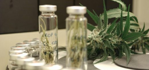 Cannabinoids Show Promise In Slowing MS, But 'High' Raises Concern