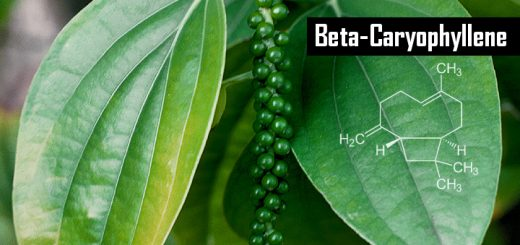 Beta-Caryophyllene: The Dietary Cannabinoid That Could Make Synthetics Irrelevant