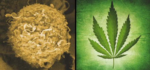 Cancer Researchers Are On The Verge Of Human Trials With Cannabis