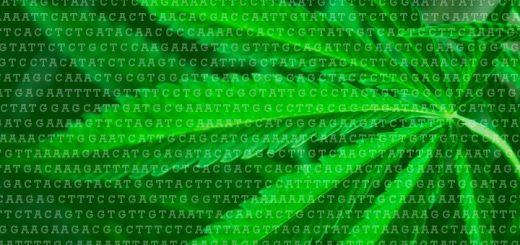 How The Cannabis Genome Got Mapped: Q&A With Dr. Jonathan Page