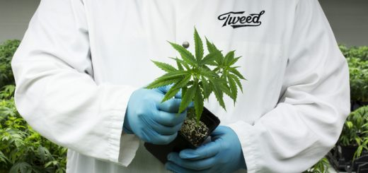 How To Get A Job In The Marijuana Industry: Q&A With Tweed Inc.