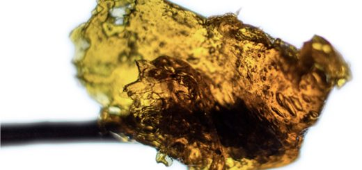 Dabs, Dabbing and BHO Explained