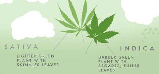 Sativa vs. Indica: Knowing Your Medicine [Infographic]