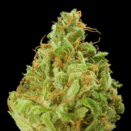 popular-weed-strains-2