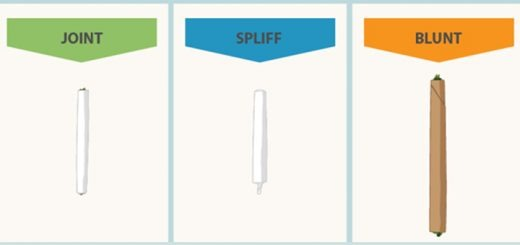 Joint vs. Spliff vs. Blunt: What's the Difference? [Infographic]