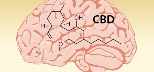 5 Ways CBD Affects Your Brain