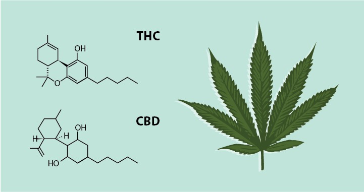 Image result for Cannabinoids