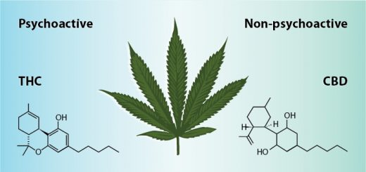5 Differences Between CBD and THC