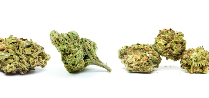 indica vs sativa buds