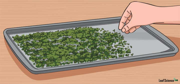 Spread out cannabis in a thin, even layer on baking sheet.
