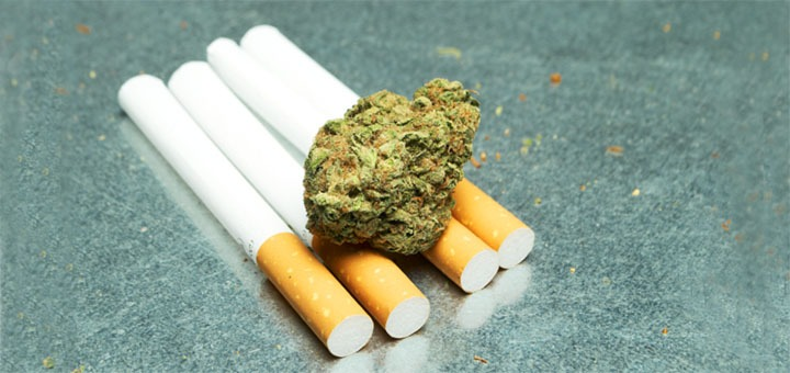 A photo of cigarettes and marijuana related to lung damage.