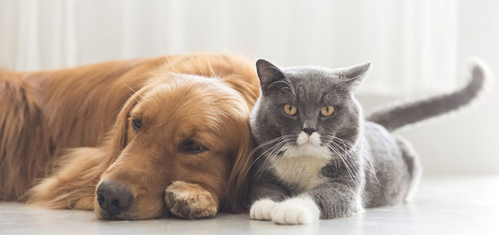 Photo of a cat and dog .