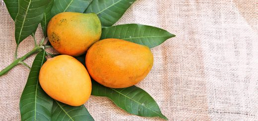 Mangoes and Marijuana: What Are The Effects?