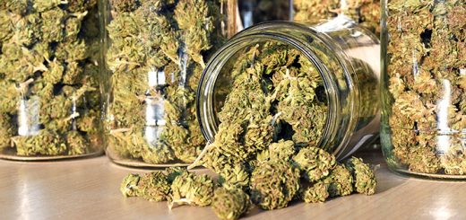 How To Store Marijuana: 5 Tips For Beginners