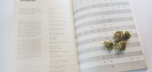 FourReasons Why You Should Start a Medical Cannabis Journal