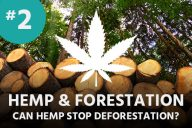 Hemp and Forestation