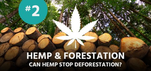 Can Hemp save our Forests?