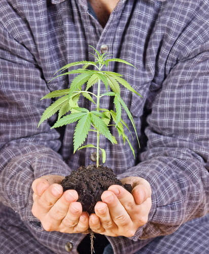 How to Recycle Cannabis Stalks, Leaves, & Stems