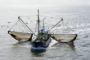 Large-scale Fishing Trawlers can catch massive amounts of fish in a short space of time