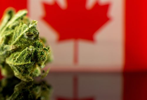 The Medical Market is More Necessary Than Ever in Canada Following Legalization